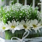 9 ایده برای سبزه عید