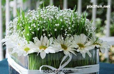تزئین سبزه عید (9)
