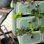تزئین گیاهان (2)