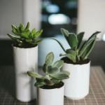 تزئین گیاهان (5)
