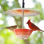 عکس-غذای پرنده (1)