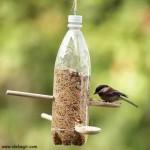 عکس-غذای پرنده (5)
