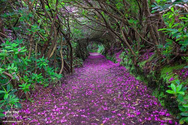مسیرهای شگفت انگیز پیاده روی در جهان