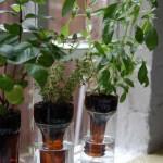 plants-plowers-creativity (2)