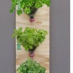 plants-plowers-creativity (4)